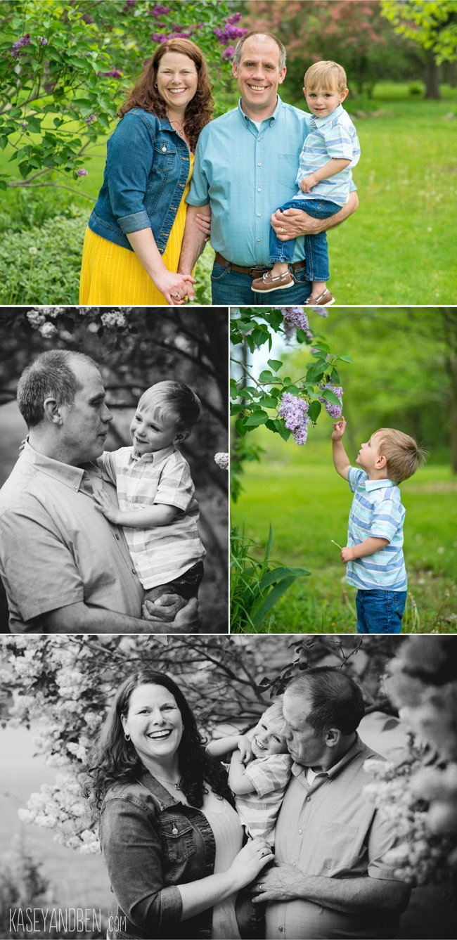 Lilacs Spring Photos