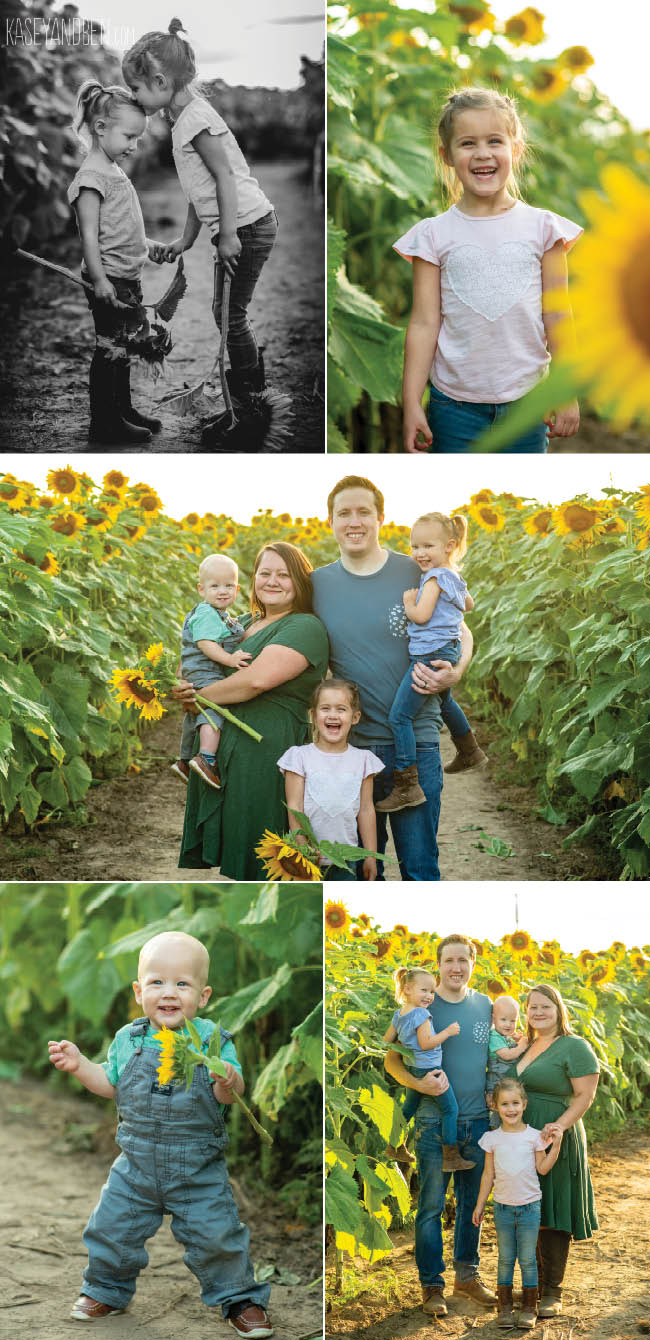 Bergsbaken Farms Sunflower Fields
